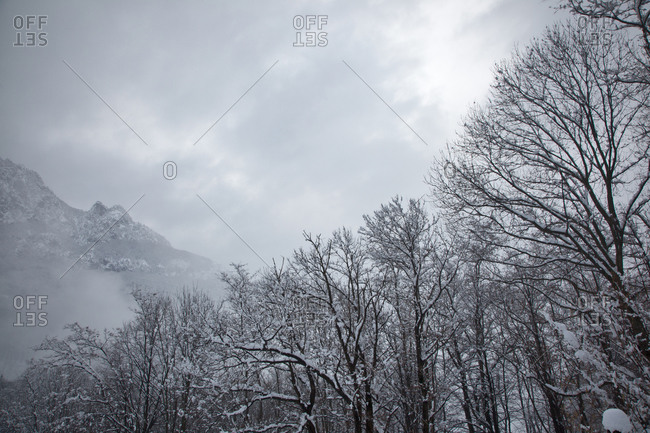 Snowy trees, Caneed, Ticino, Switzerland
