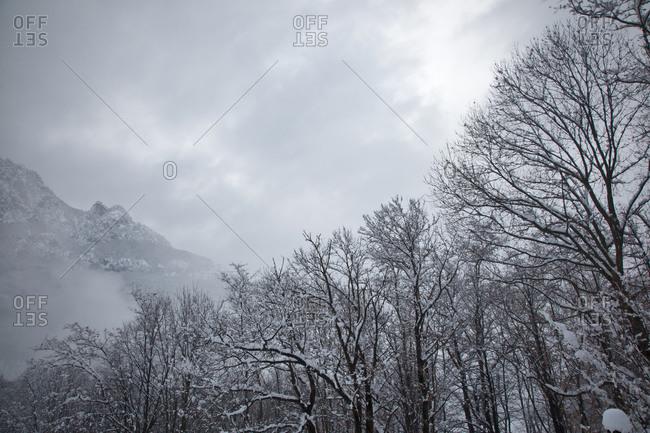 Snowy trees, Caneed, Ticino, Switzerland