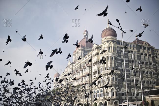 Flock of pigeons at the Taj Mahal Palace Hotel in Mumbai, India