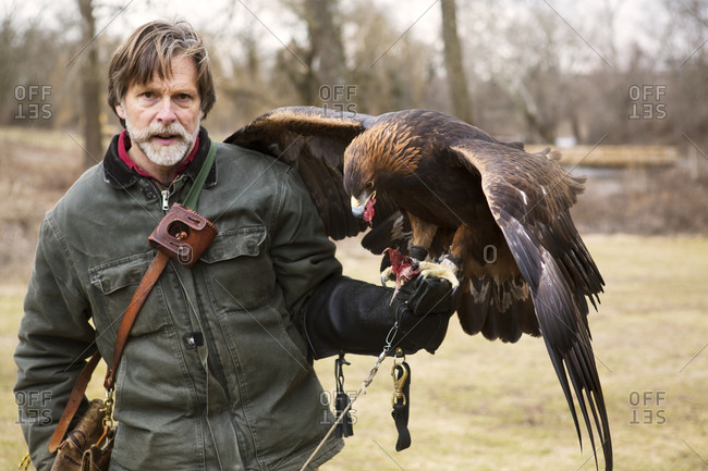 A bird handler feeds his golden eagle red meat