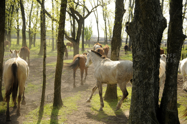 Horses in a field in Buenos Aires, Argentina