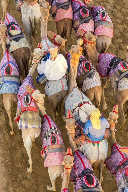 High angle view of camel racers at a track in Dubai