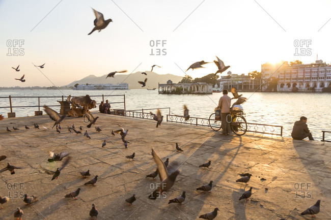 Pigeons flying by Pichola Lake, Udaipur, Rajasthan, India