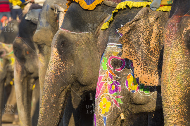 Elephants waiting to carry tourists up to Amber Fort in Jaipur, Rajasthan, India