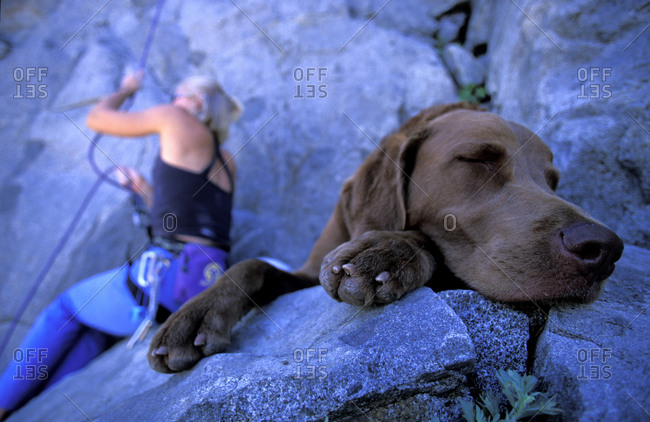 Dog takes a nap while a woman is climbing at Elephants Graveyard in Mokelumne Wilderness, California