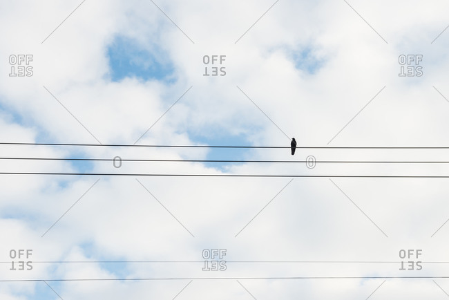 Black bird perched on the wire