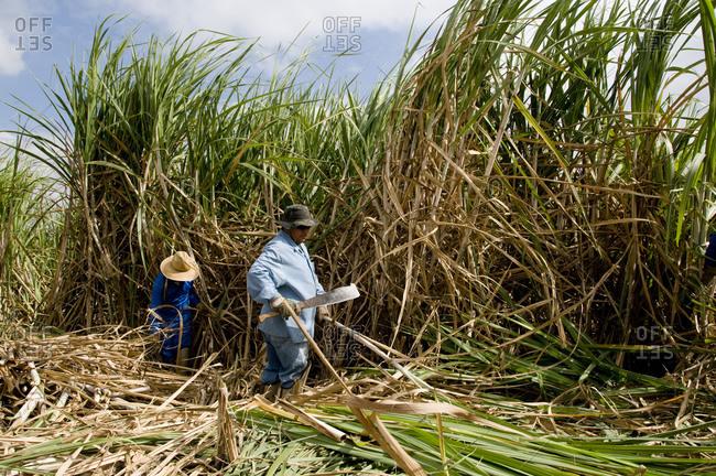 Piracicaba, São Paulo, Sudeste, Brazil - May 20, 2009: Farmhands chop down sugar cane