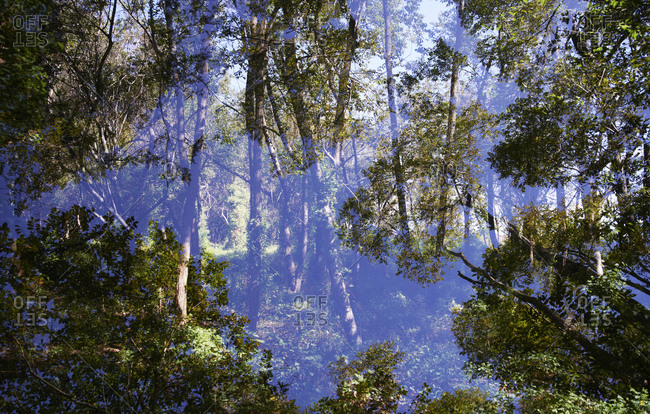 Double exposure of a wooded landscape