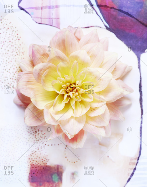 Single Flower Bloom Resting On Watercolor Painting Stock Photo