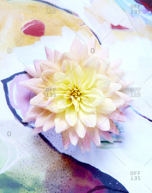 Pink dahlia resting on watercolor painting