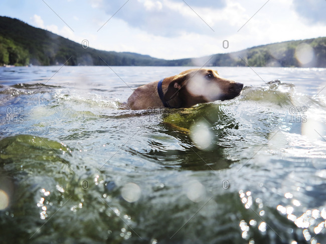 Dog swimming through choppy lake water