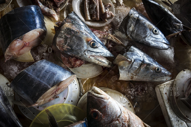 Fish heads and parts chopped up on ice