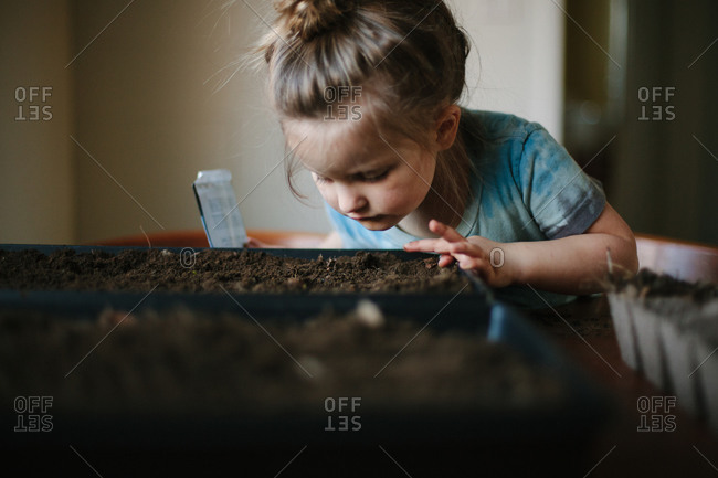 A little girl plants seeds in a tray of dirt