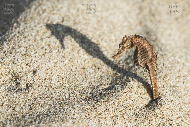 Sun lit seahorse on the beach