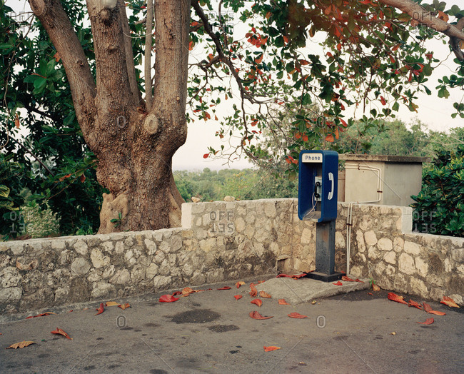 Payphone under a tree