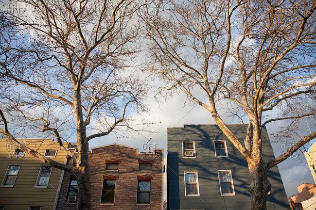Leafless trees in front of a row of houses