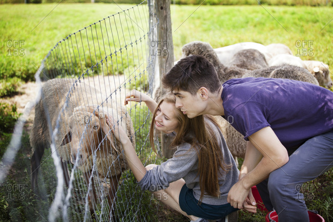 Couple petting goats on a farm