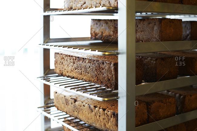 Baked rye bread loaves on rack