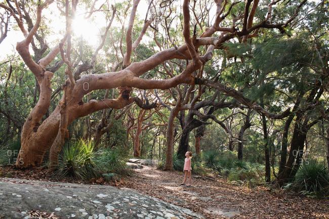 Girl looking up at gnarled trees