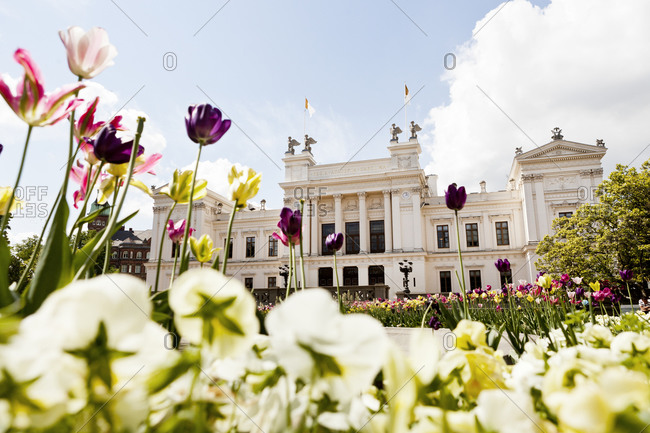 Lund, Sweden - May 27, 2013: Tulips growing in front of Lund University in Sweden
