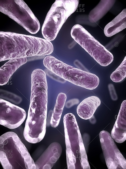 Close up of a purple bacteria