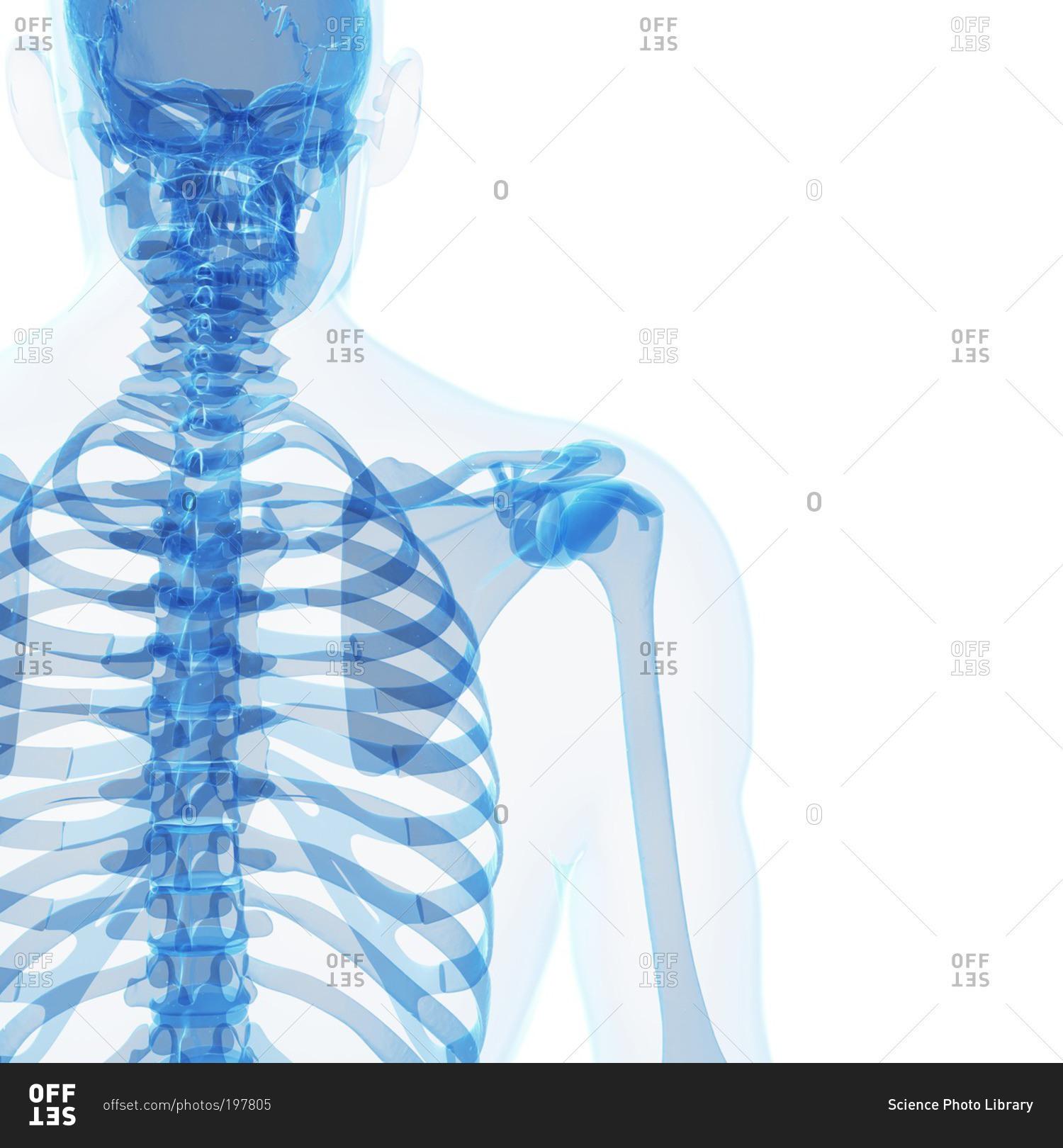 Ungewöhnlich Wo Greys Anatomy Online Zu Sehen Fotos - Anatomie Ideen ...