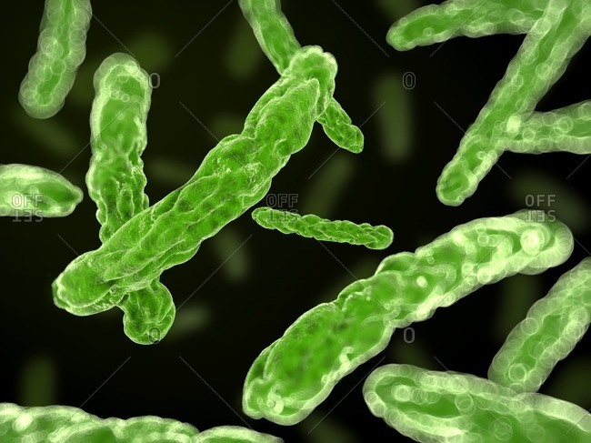 Illustration of green bacteria