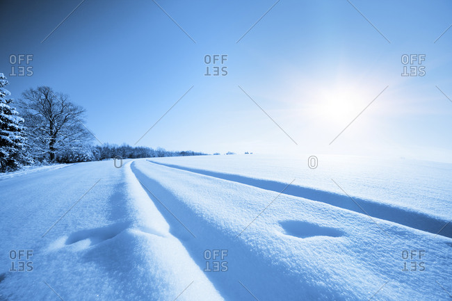 Snow covered field in sunlight