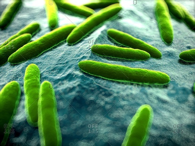 Close up of green bacteria