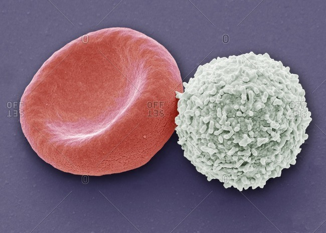 Close up of blood cells