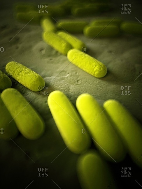 Illustration of yellow bacteria