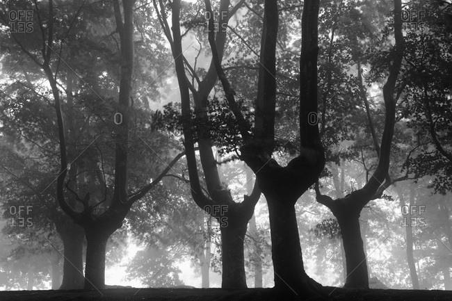 Trees at Urkiola Natural Park