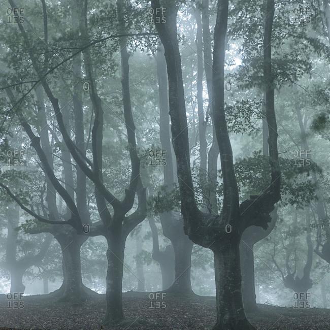 Trees in misty Urkiola Natural Park