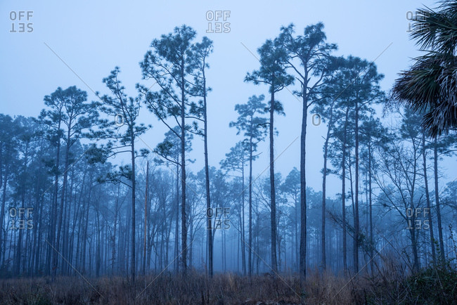 Haze in the Pine Barrens