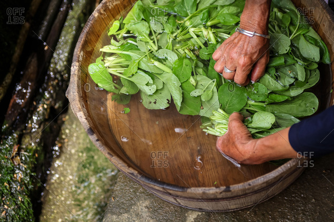 Chinese woman washing leafy greens in tub