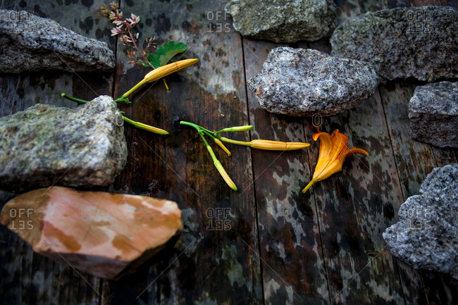 Tiger lily flower heads amid rocks on boards