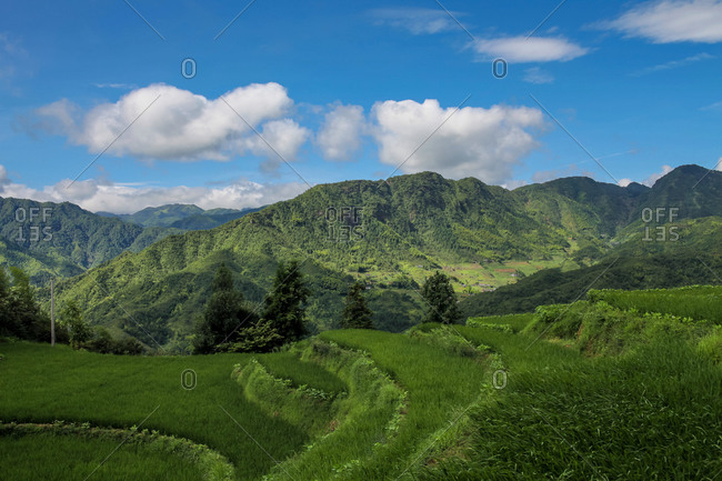 Verdant steppes in Chinese mountainous landscape