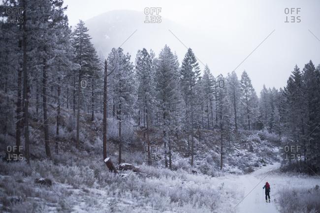 A man starts a ski traverse through the Rattlesnake Mountain range by skiing up a logging road near Missoula, Montana