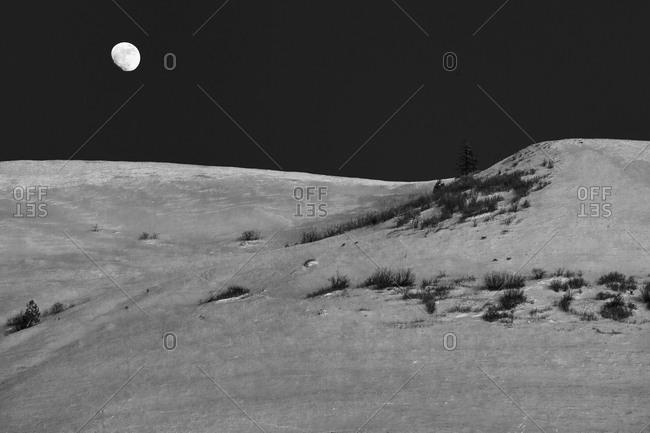 Deer graze in the snow while the moon rises over Mount Jumbo near Missoula, Montana