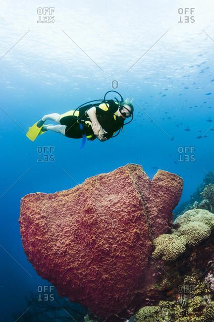 A female diver explores a barrel sponge, St Lucia