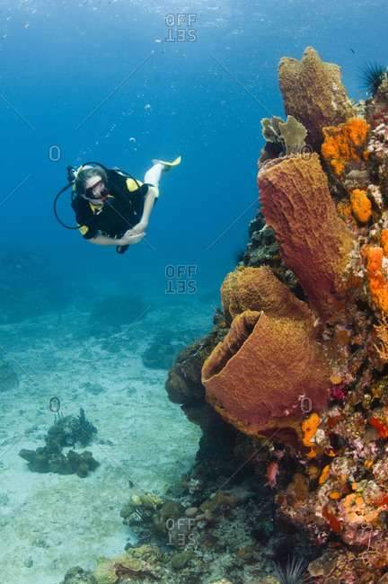 A female diver explores a barrel sponge and corals, St Lucia