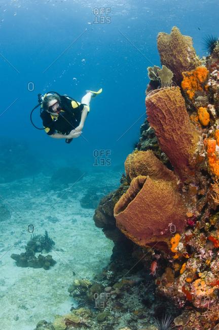 A female diver explores a barrel sponge and corals, St Lucia