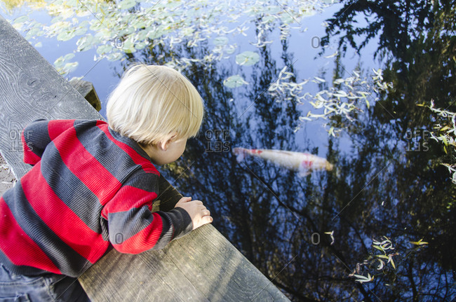 Toddler boy looking over edge and watching koi fish in pond
