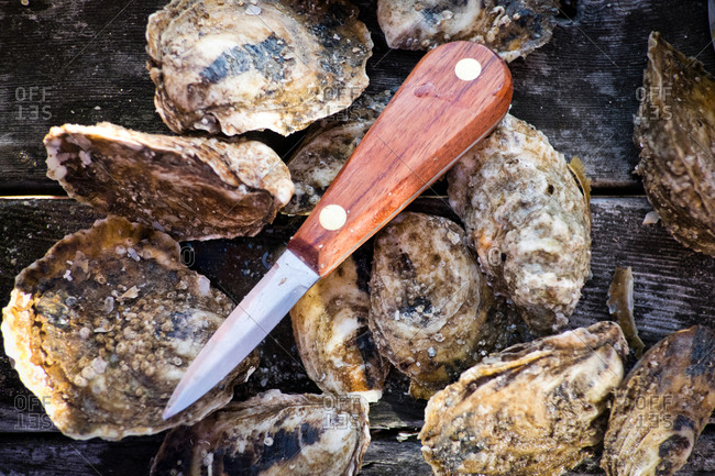 Close-up of oysters and a shucking knife sitting on a wooden table