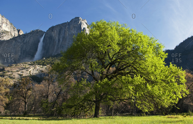 Yosemite Falls as seen from the valley floor in Yosemite National Park, California