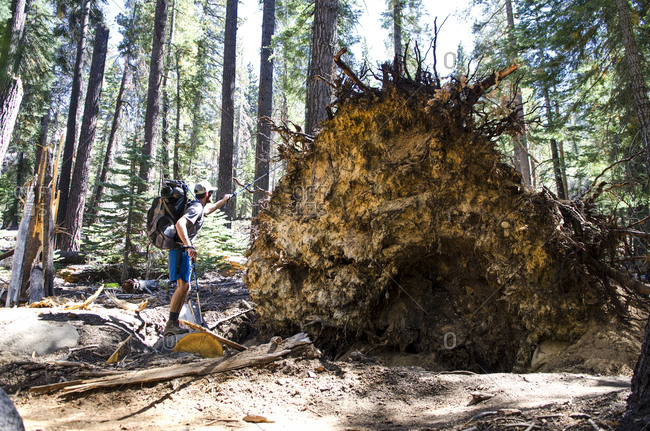 A young man walks by remnants of a powerful windstorm along the John Muir Trail in Tuolumne Meadows, California