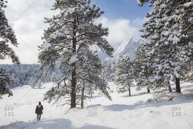A young woman hikes through the snow towards the Flatirons in Chautauqua Park, Boulder, Colorado