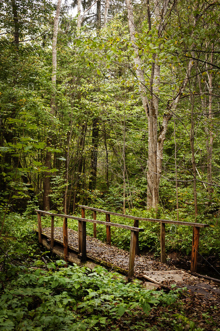 Trail through verdant dense woods