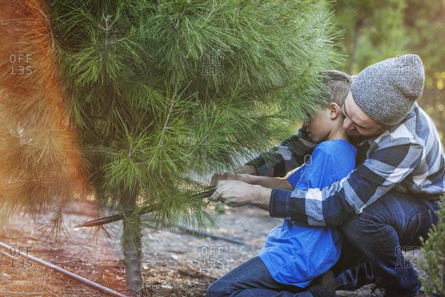 Man helping boy cut down pine tree