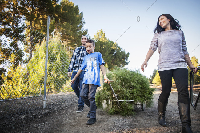 Family pulling cut down pine tree on cart
